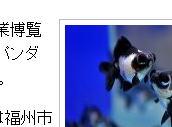 ジャイアントパンダの柄の金魚