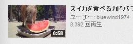 youtube すいか 動物